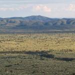 Mar de olivos en la Plana de La Galera